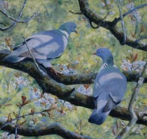 Pigeons - Step 5