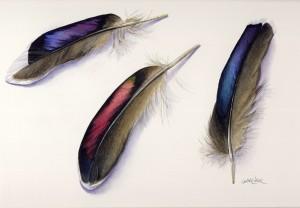 Iridescent Feathers - Jackie Garner