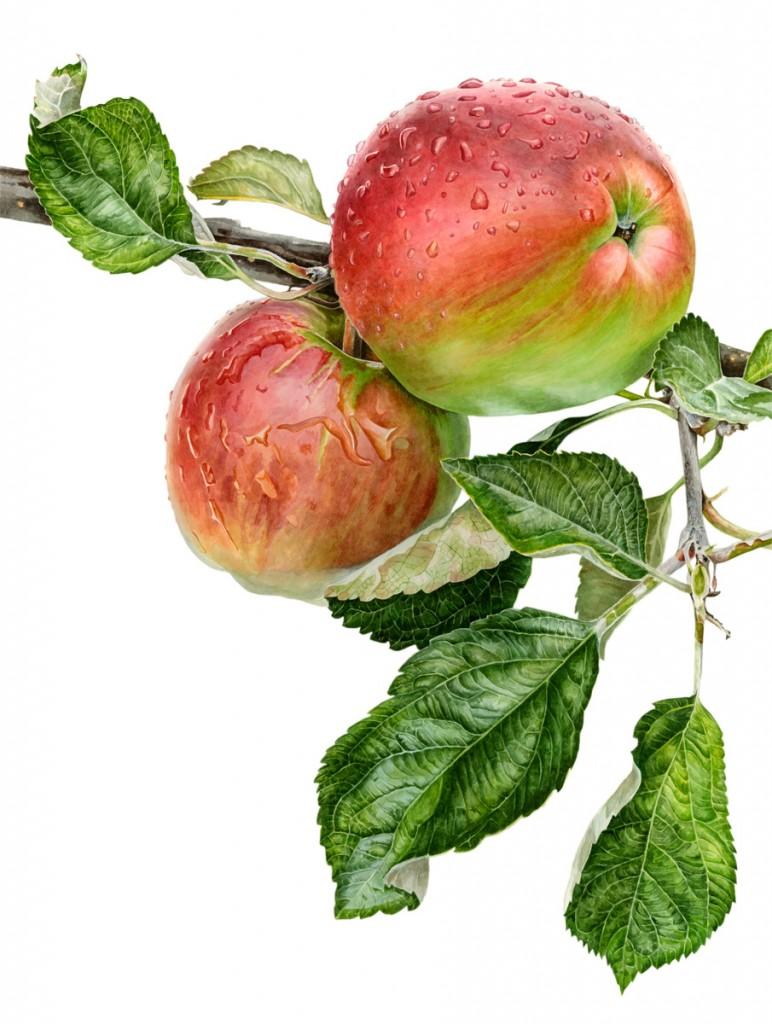 AppleAcme