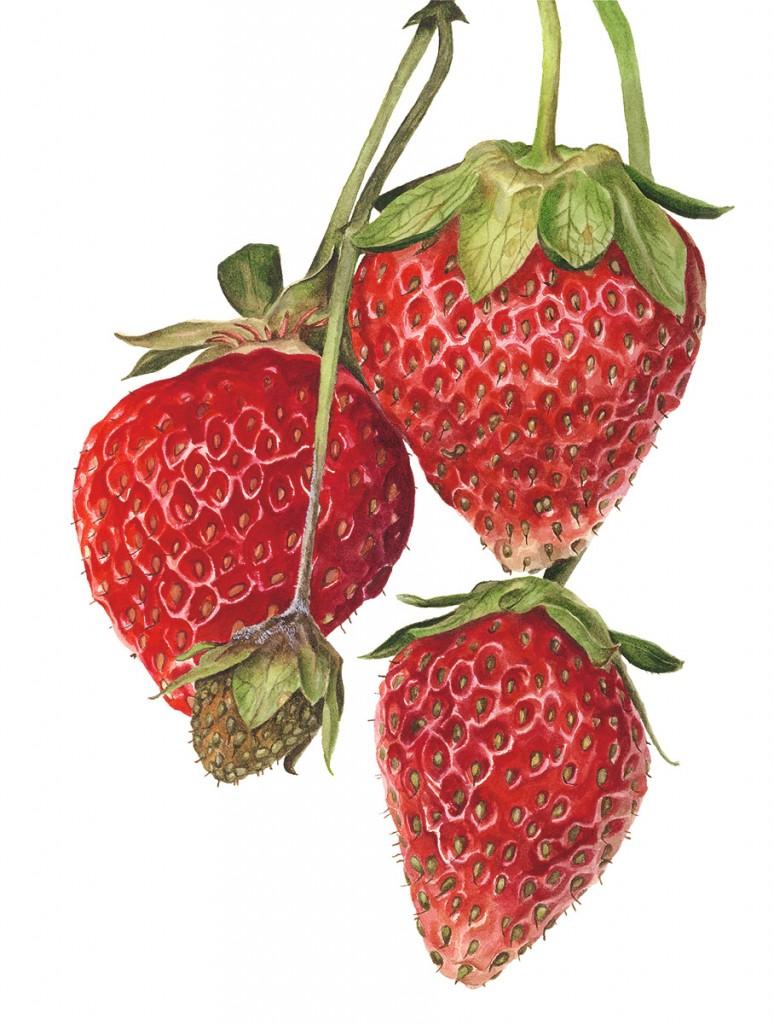 StrawberriesEverest