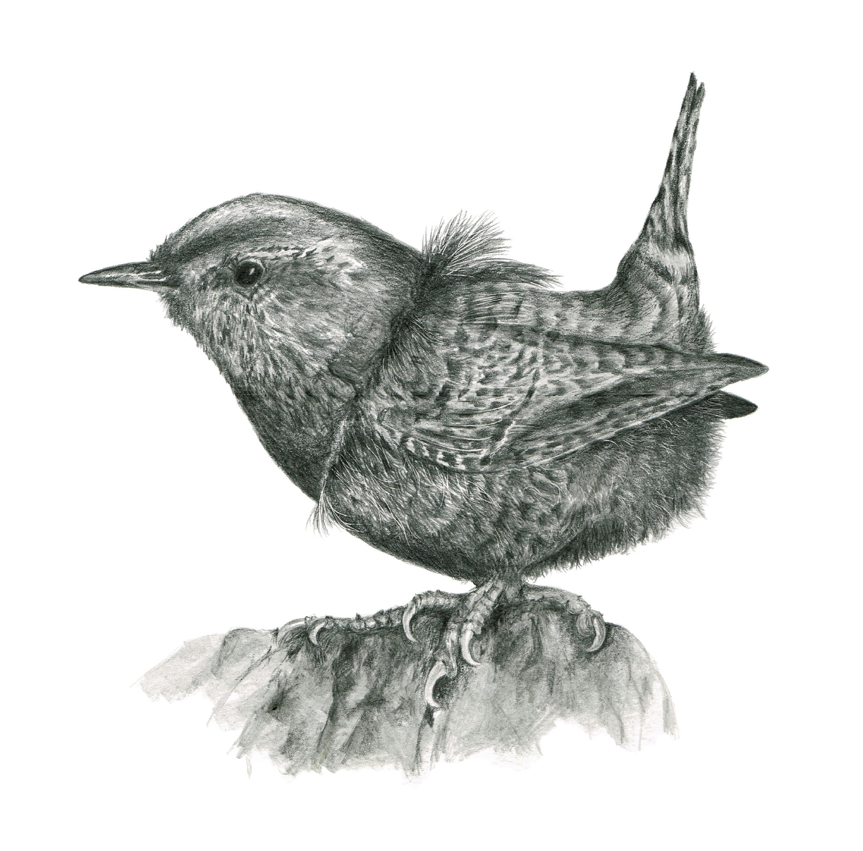 'Shetland Wren' by Louisa Crispin