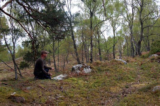 Fig-2.-Dundreggan-forest