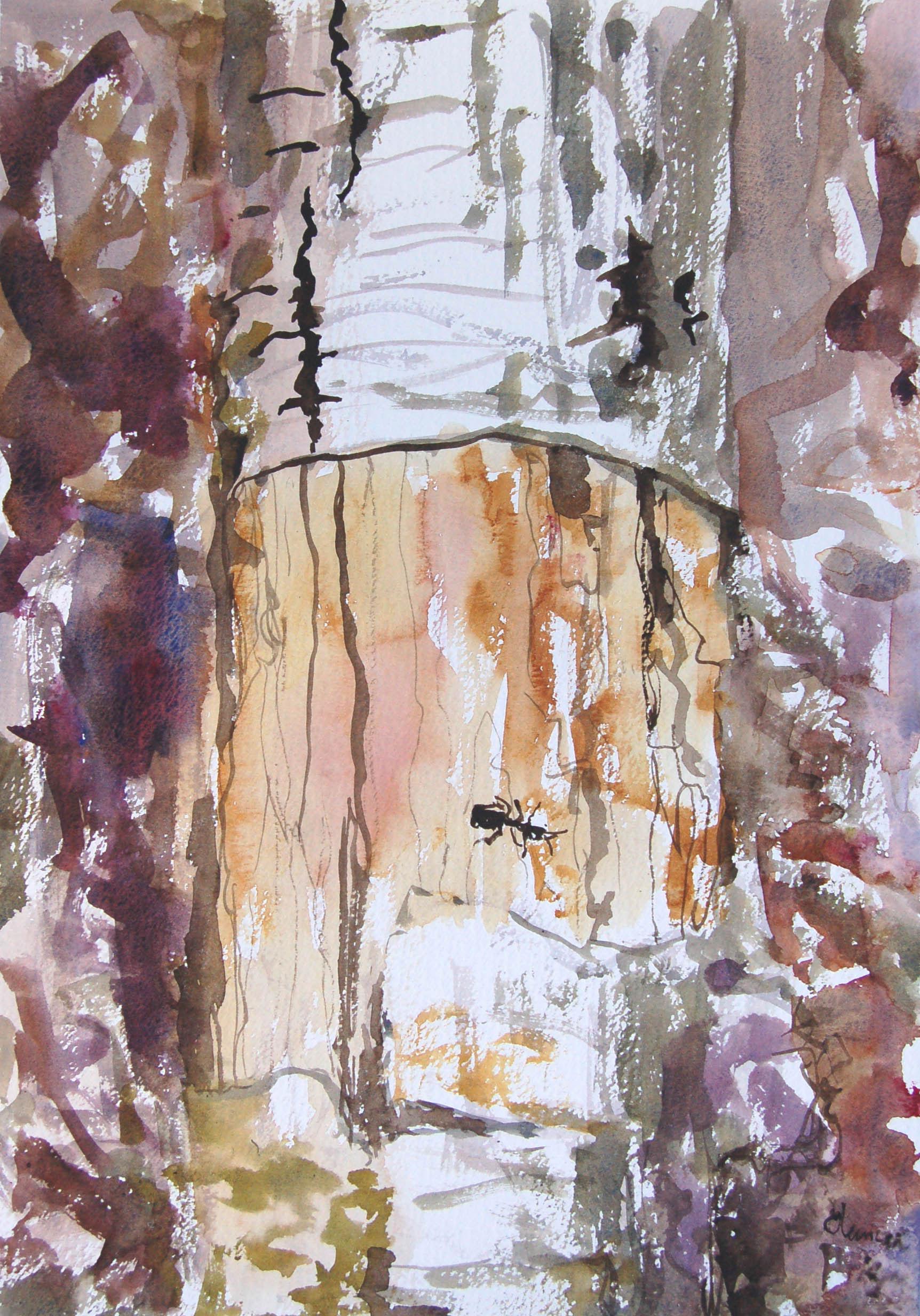 Wood-ant-on-birch-branch.-31.5