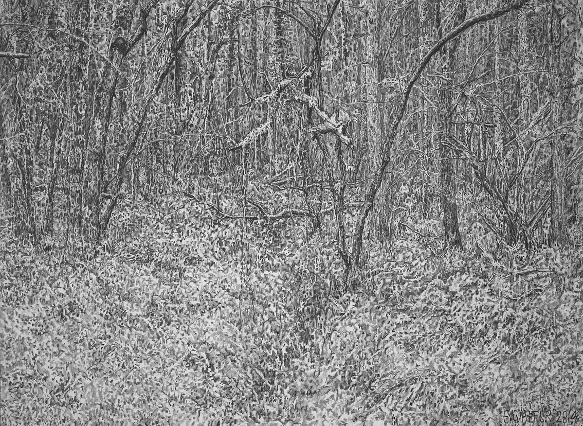 Stephen Walter: Of This Wood Man Shall Know Nothing. Graphite on Paper. 33.5 x 45.4 cm (Courtesy Of Artist)