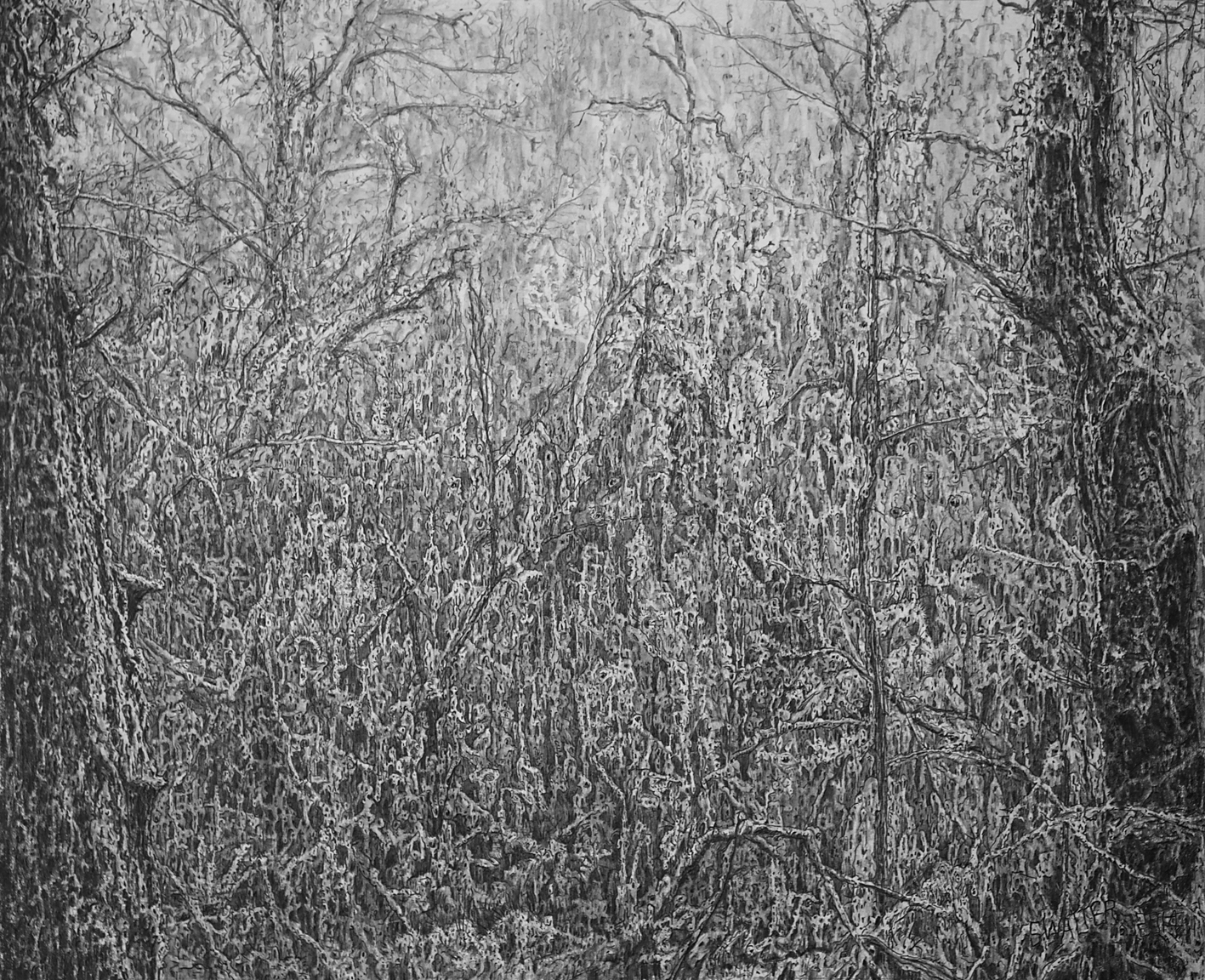 Stephen Walter: The Woods Where Them Live, 2014. Graphite on Paper. 33.5 x 41.3 cm (Courtesy Of Artist)
