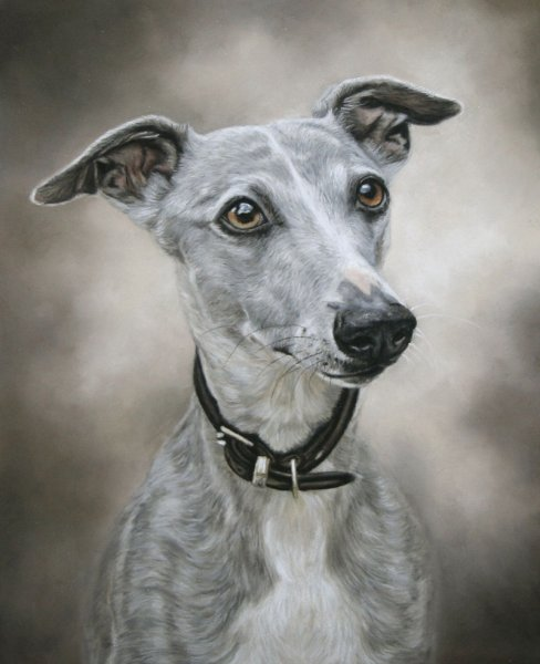 'Charlie' by Sarah Leigh, www.sarahspetportraits.co.uk