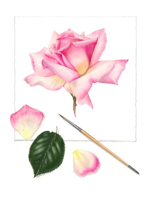 Billy Showell: Rose Study