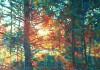 Sunset tree by Hashim Akib