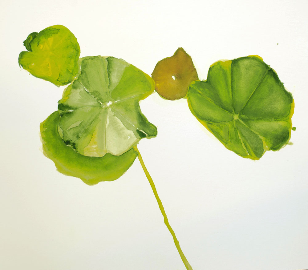 Unfinished painting of nasturtium leaves using ShinHan Pass by Julie Caves