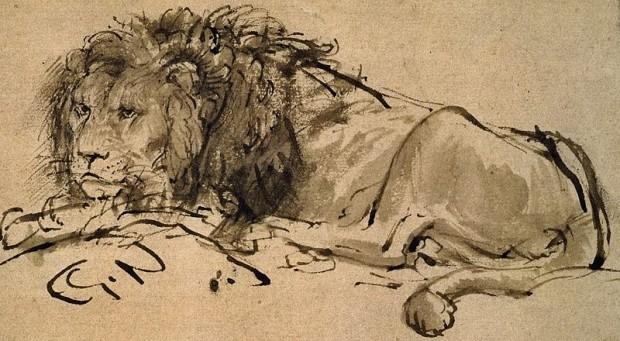Rembrandt Lion Lying Down