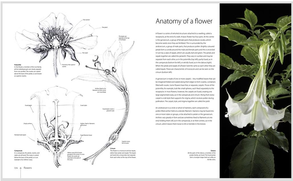 Botany for the Artist - Jackson\'s Art Blog