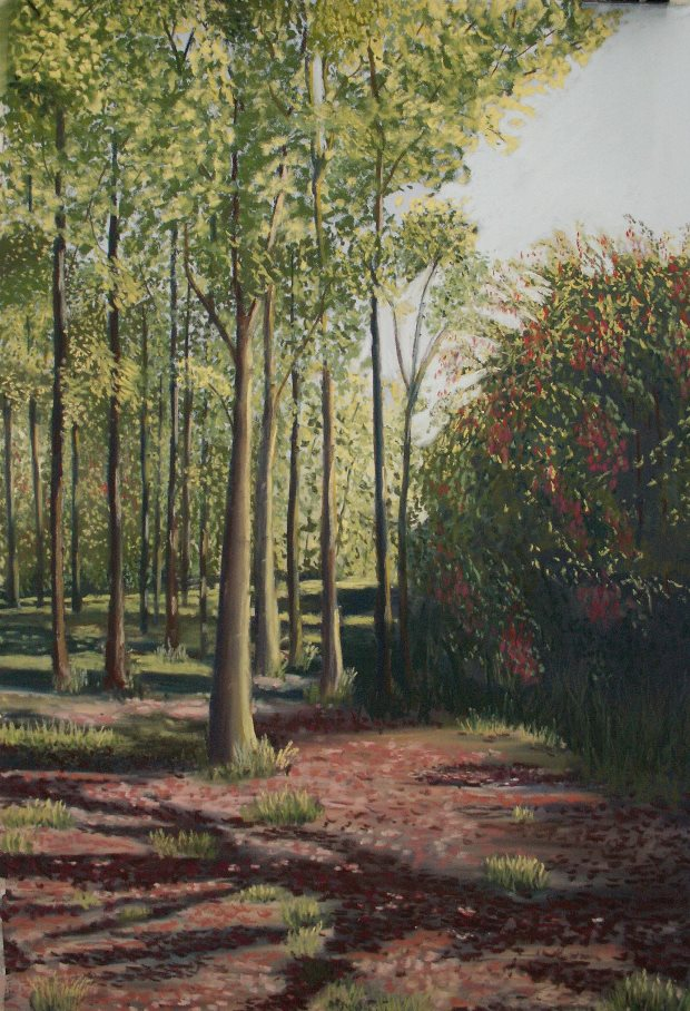 Mary Brigid Mackey: Kilsheelan Woods, 62cm x 46cm, 2006