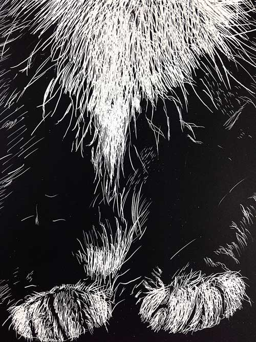Lucy Tittle Detail of drawing on Scratchbord