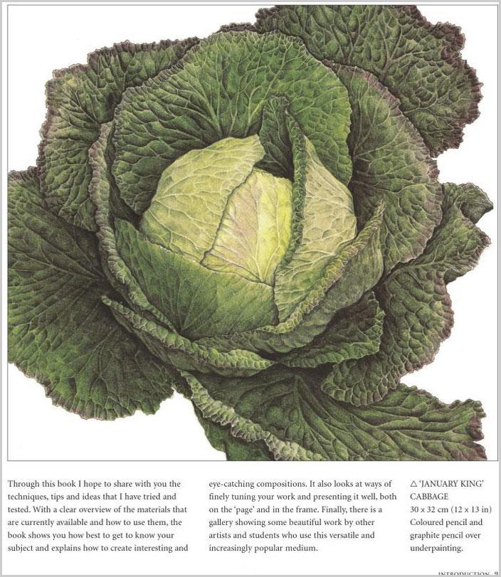 Ann-Swan-Cabbage