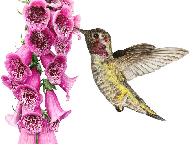 'Hummingbird' by Anna Mason