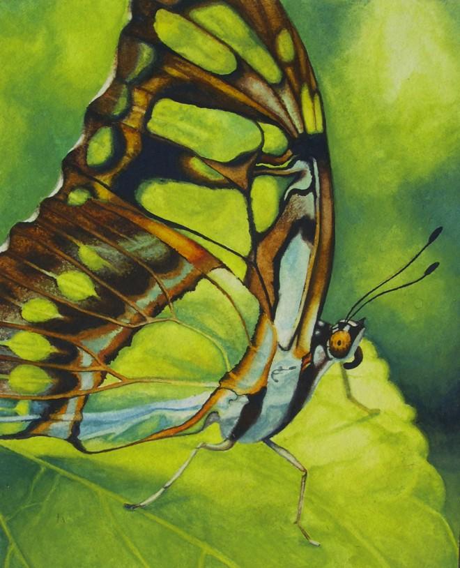 Leah Davies: 'Butterfly', gouache