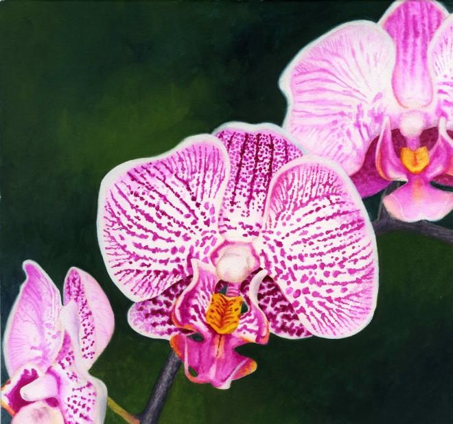 Leah Davies: 'Orchid 1', gouache