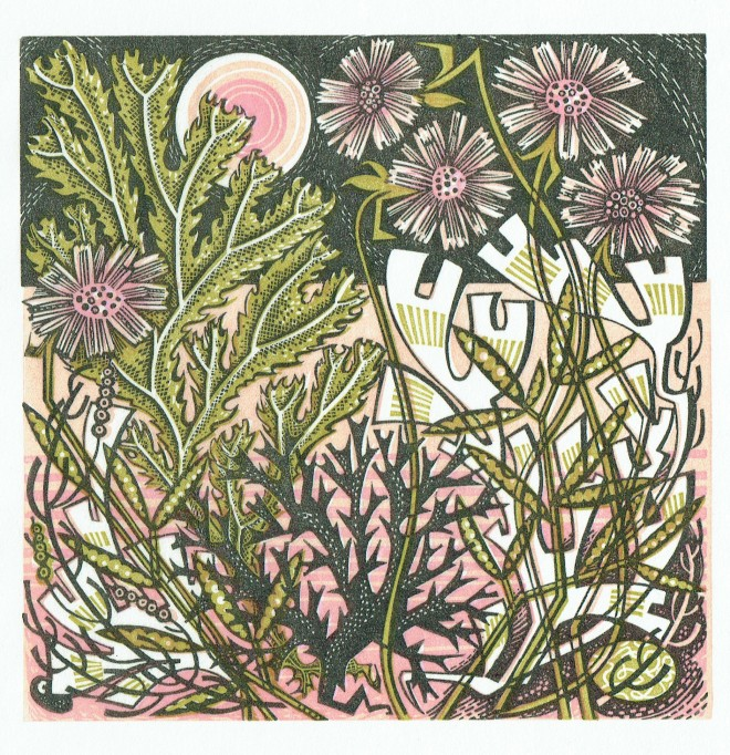 Angie Lewin: 'Sea Pinks', wood engraving, 15cm x 15cm