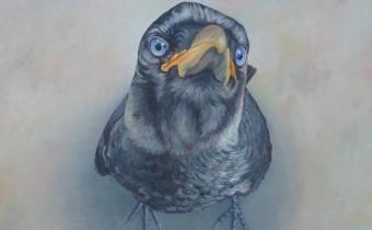 Sue Scowcroft: 'Curious corvid', oil on board, 30 x 30 cm