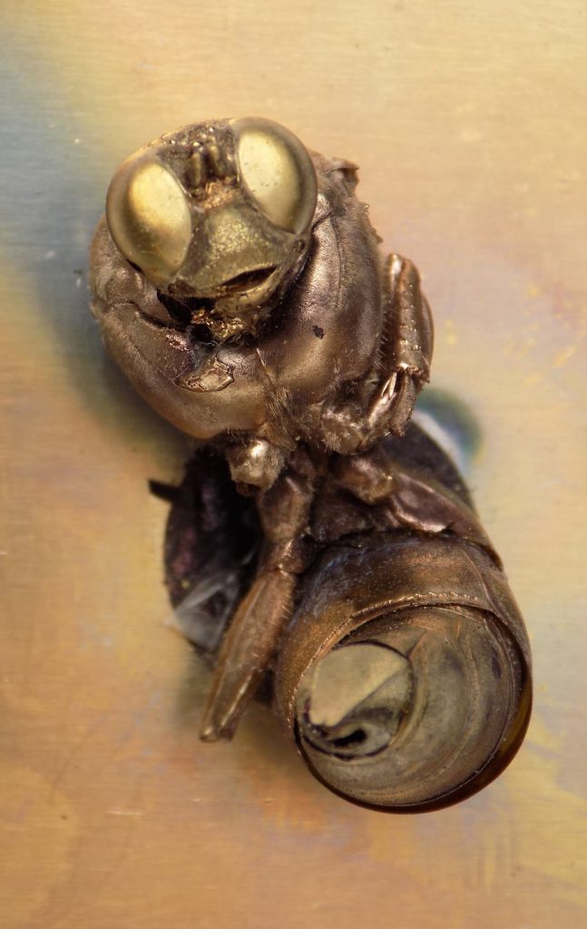 Vespa crabro Real gold coated insect 3cm 1999 Natalie McIntyre