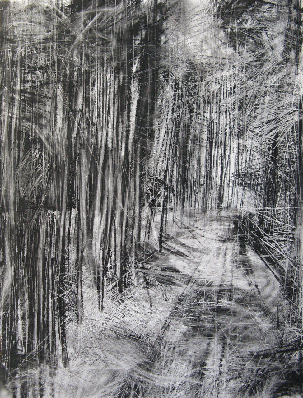 Janine Baldwin: 'Cropton Forest II', charcoal, graphite and pastel on paper, 90x70cm