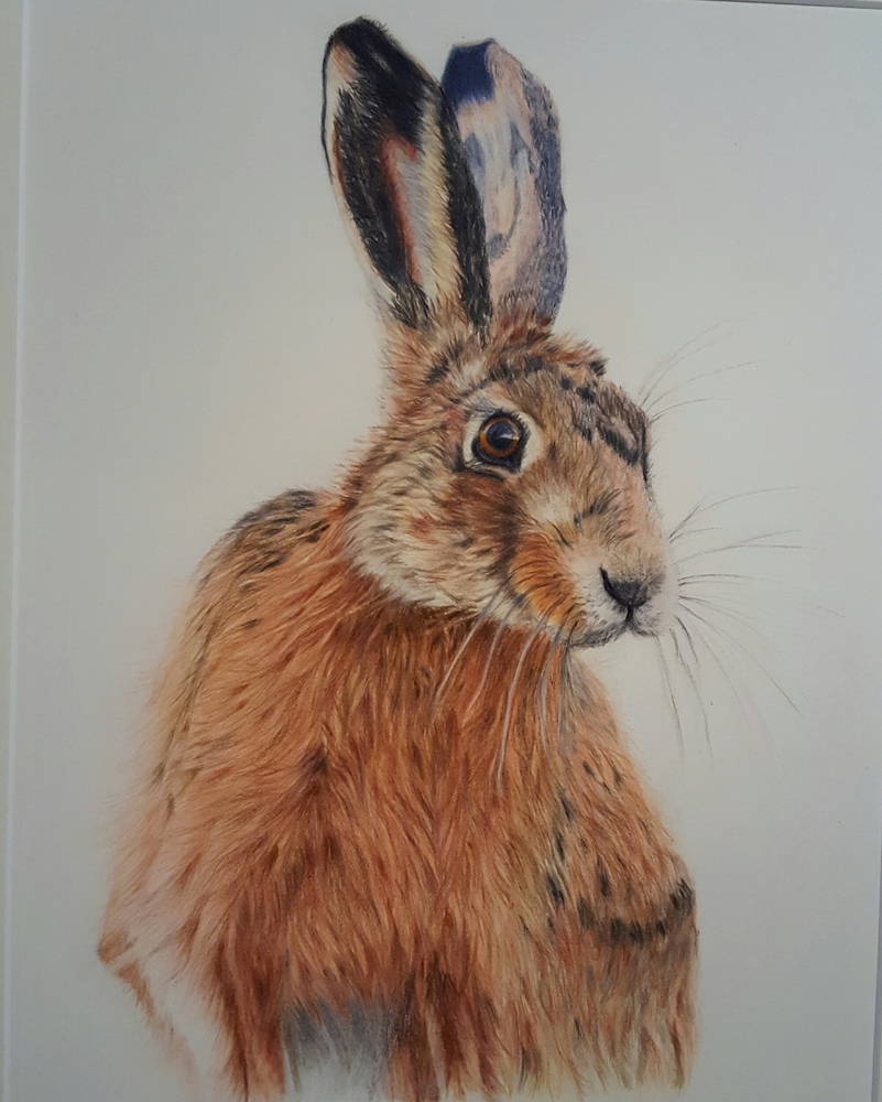 Faber Castell Calendar Art Competition : Drawn in competition winners jackson s art
