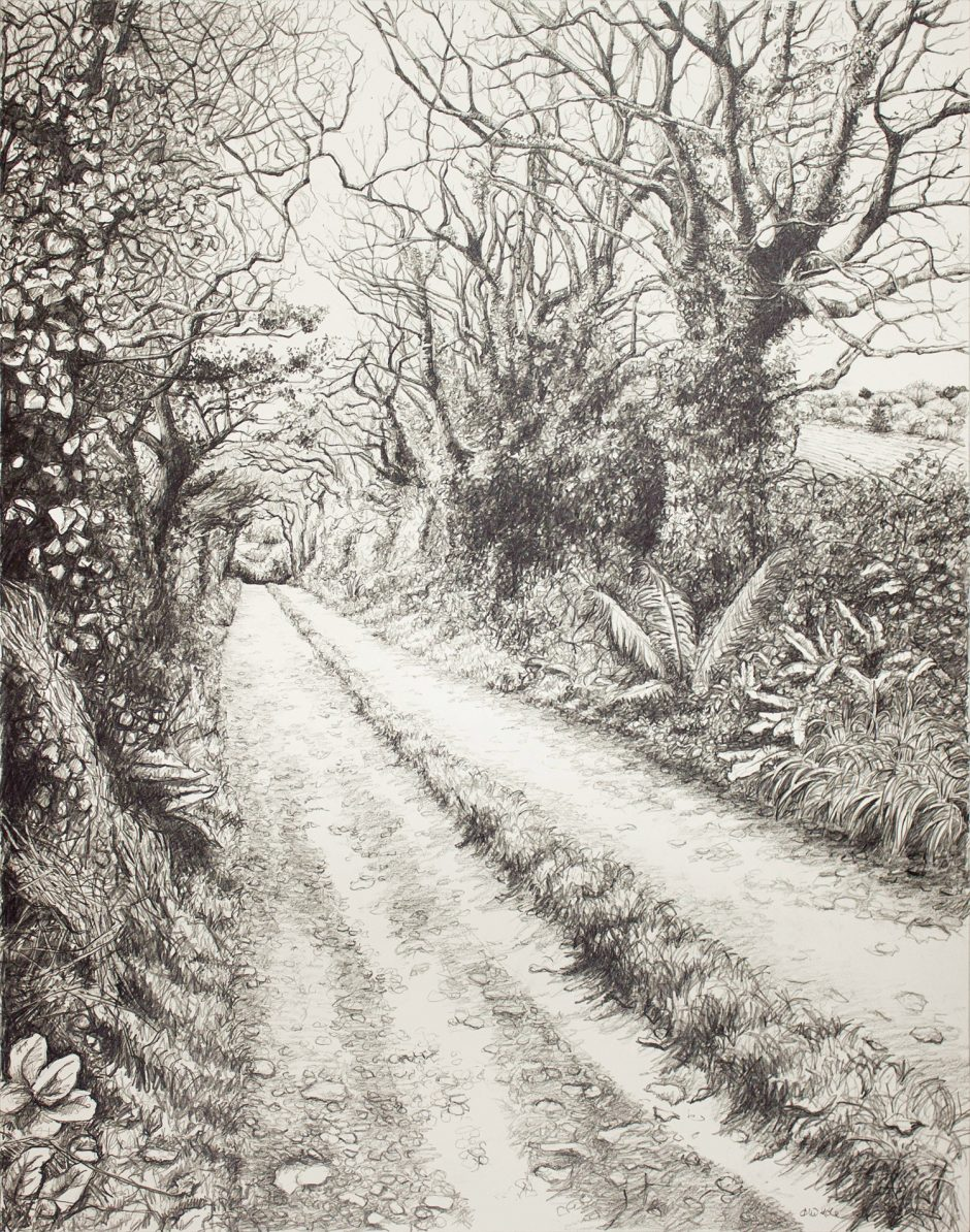 Through the Trees Darkly Alice Hole Graphite on paper, 48 x 61cm, 2016