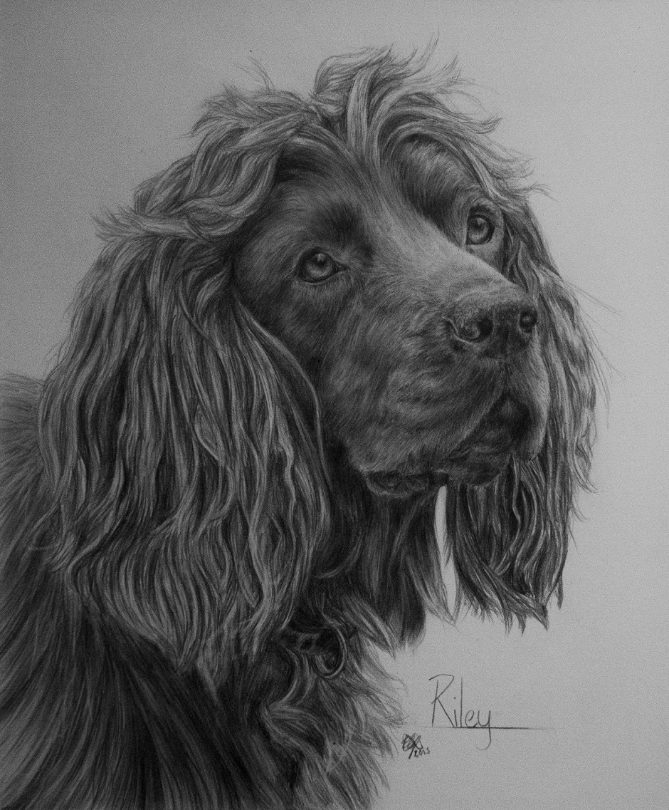 "Riley Eilidh Geddes Graphite on paper, 10""x12"", 2016"
