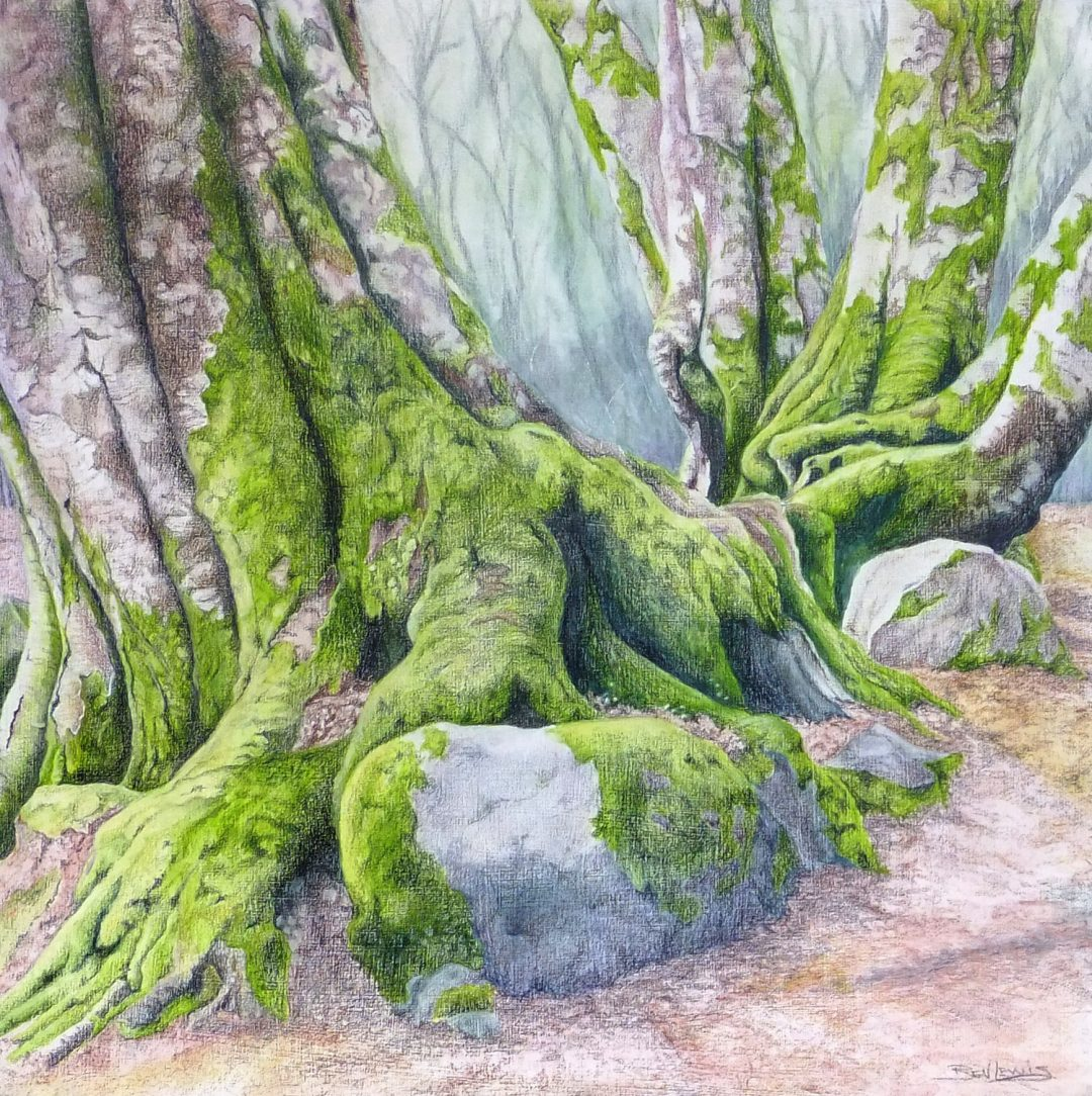 Bark and Moss Bev Lewis Derwent watercolour pencils used wet as an under wash with FC Polychromos on prepared cradled board, W 33cm x H 33cm, 2014