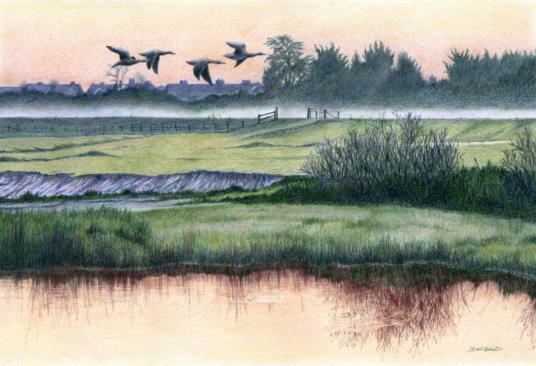Morning Flight Bev Lewis FC Polychromos on Bristol Velum, W 37cm x H 25cm, 2012