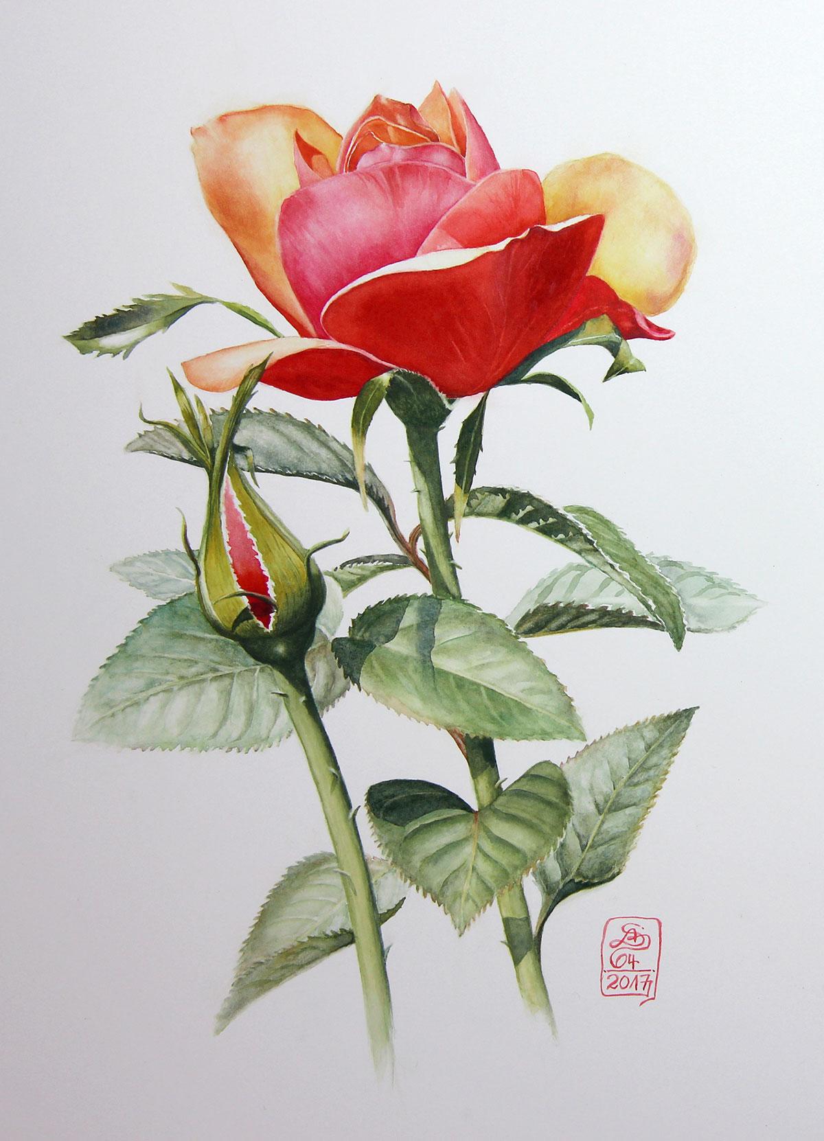 Watercolour Botanical Painting With Susanne Absolon Jackson S Art Blog