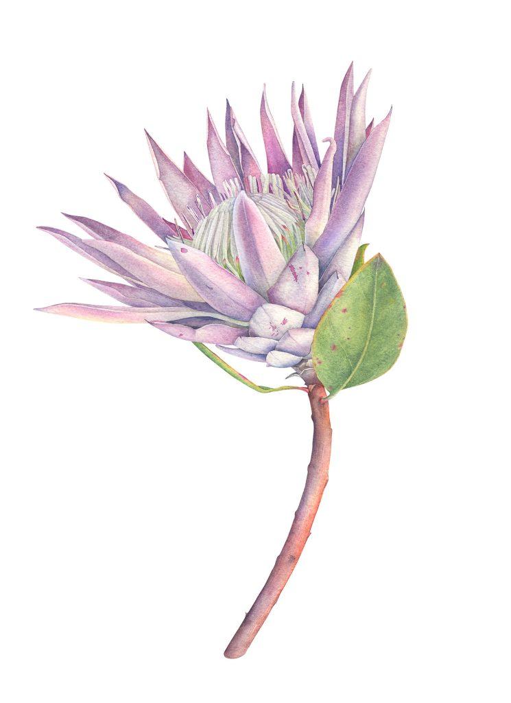 plant life botanical illustration shortlist released