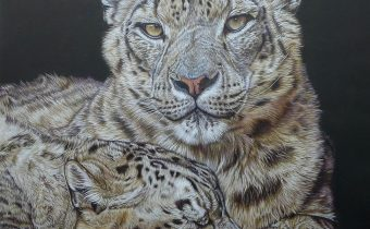 France-Bauduin-Snow-leopards-black-52-hours