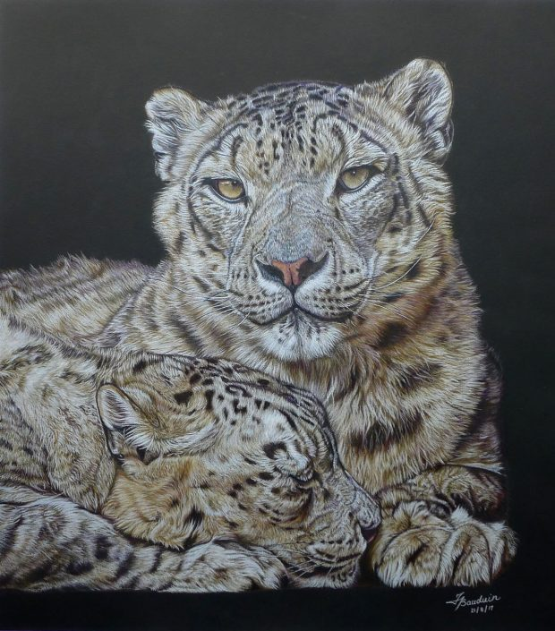France-Bauduin-Snow-leopards-black-52-hours