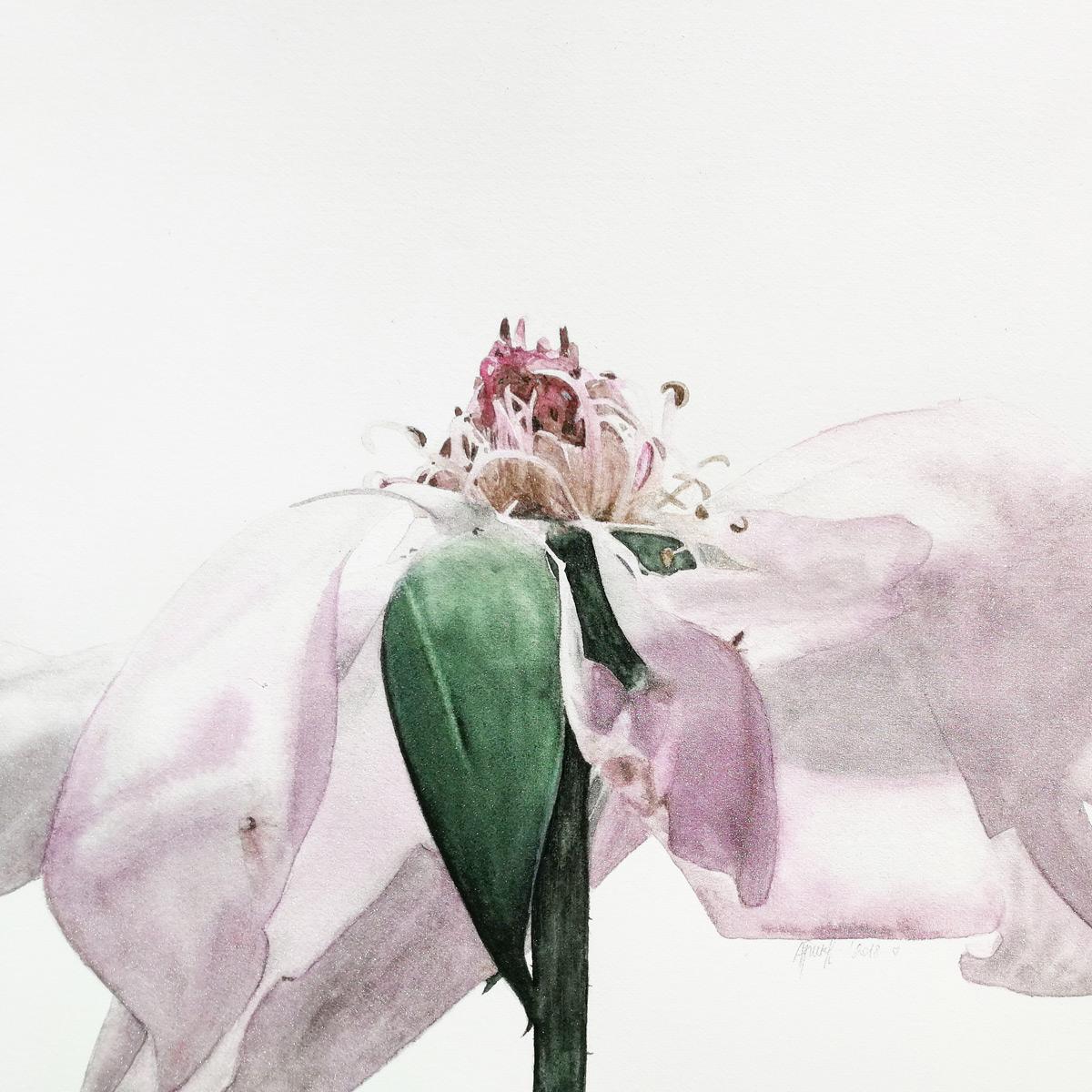 Alona Hryn Schmincke - rose---details-(1)