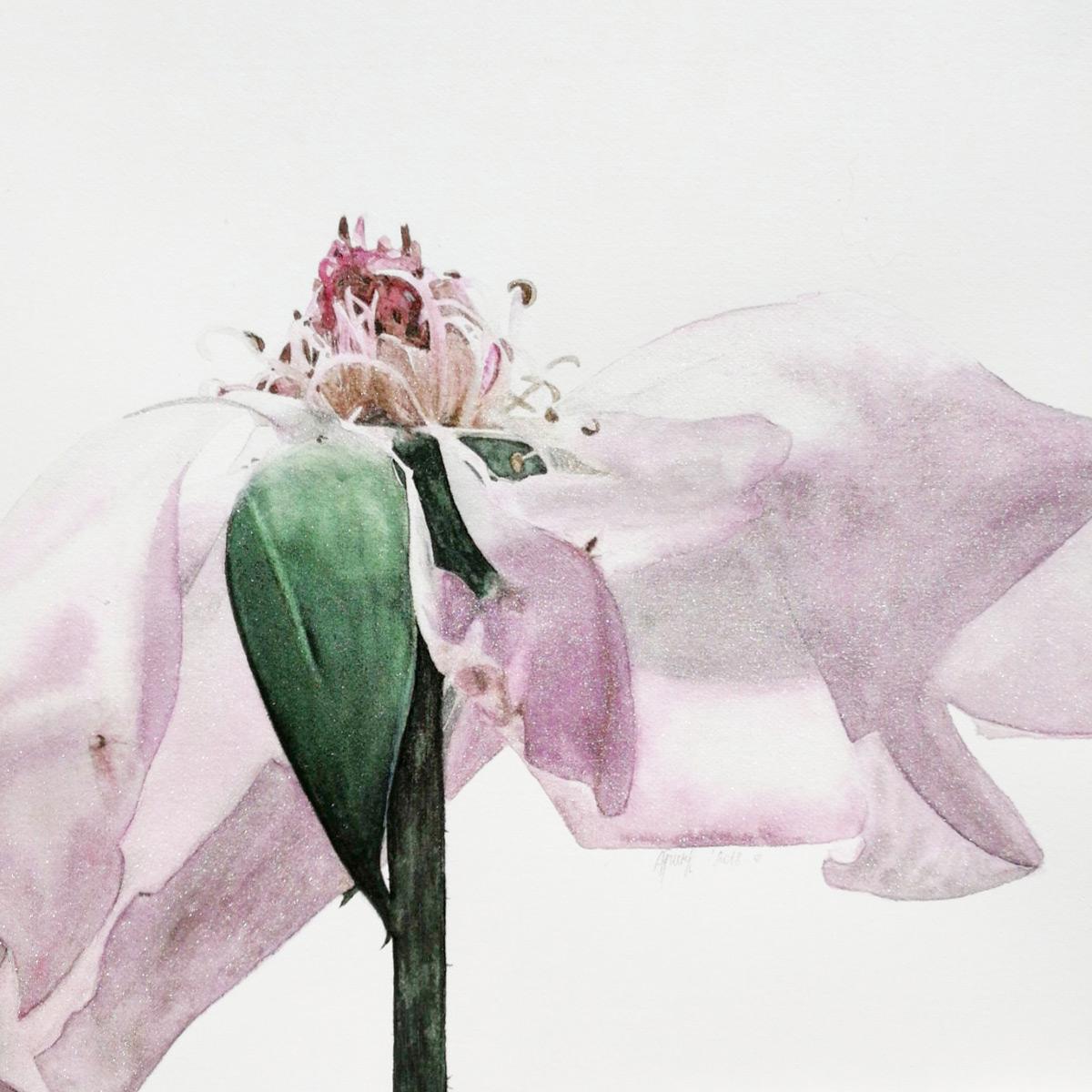 Alona Hryn Schmincke - rose---details-(2)