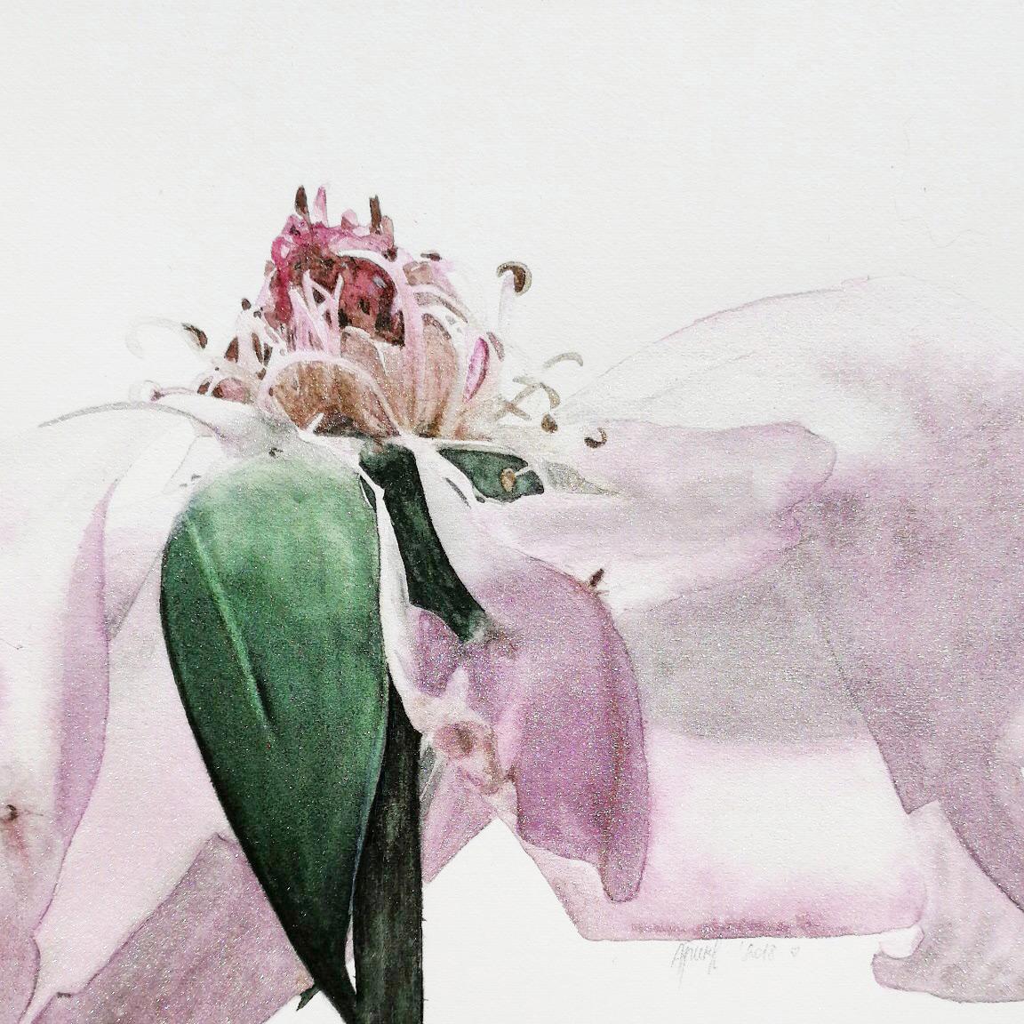 Alona Hryn Schmincke - rose---details-(3)