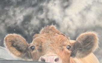 Mark Langley, 'Nosey Cow'