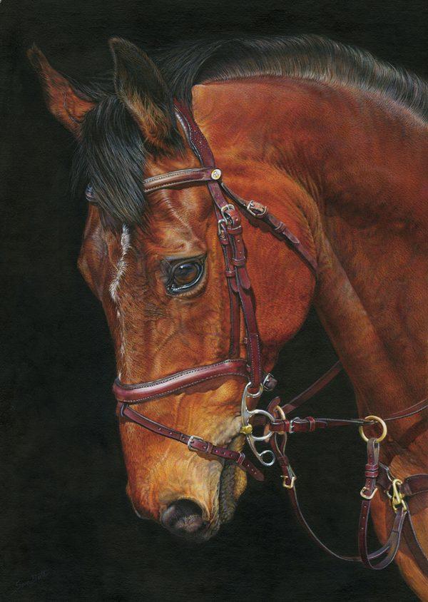 Equine Portrait, Sara Butt