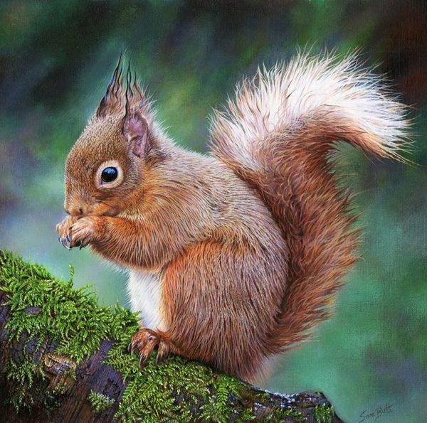 Red Squirrel, Sara Butt