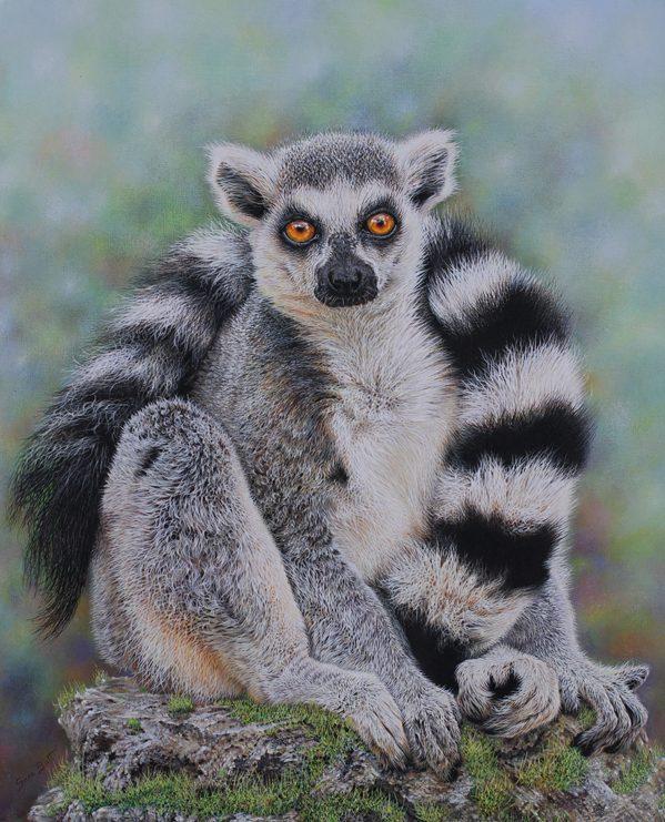 Ring-tailed Lemur, Sara Butt