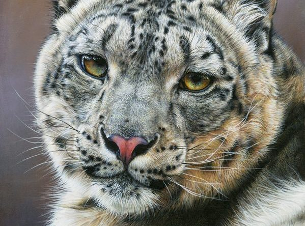 Snow Leopard, Sara Butt