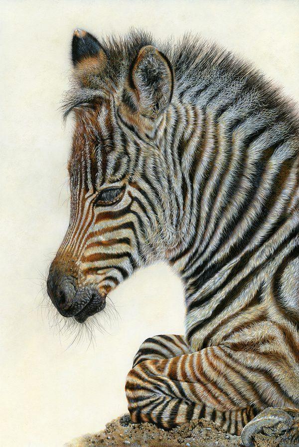 Zebra Foal, Sara Butt