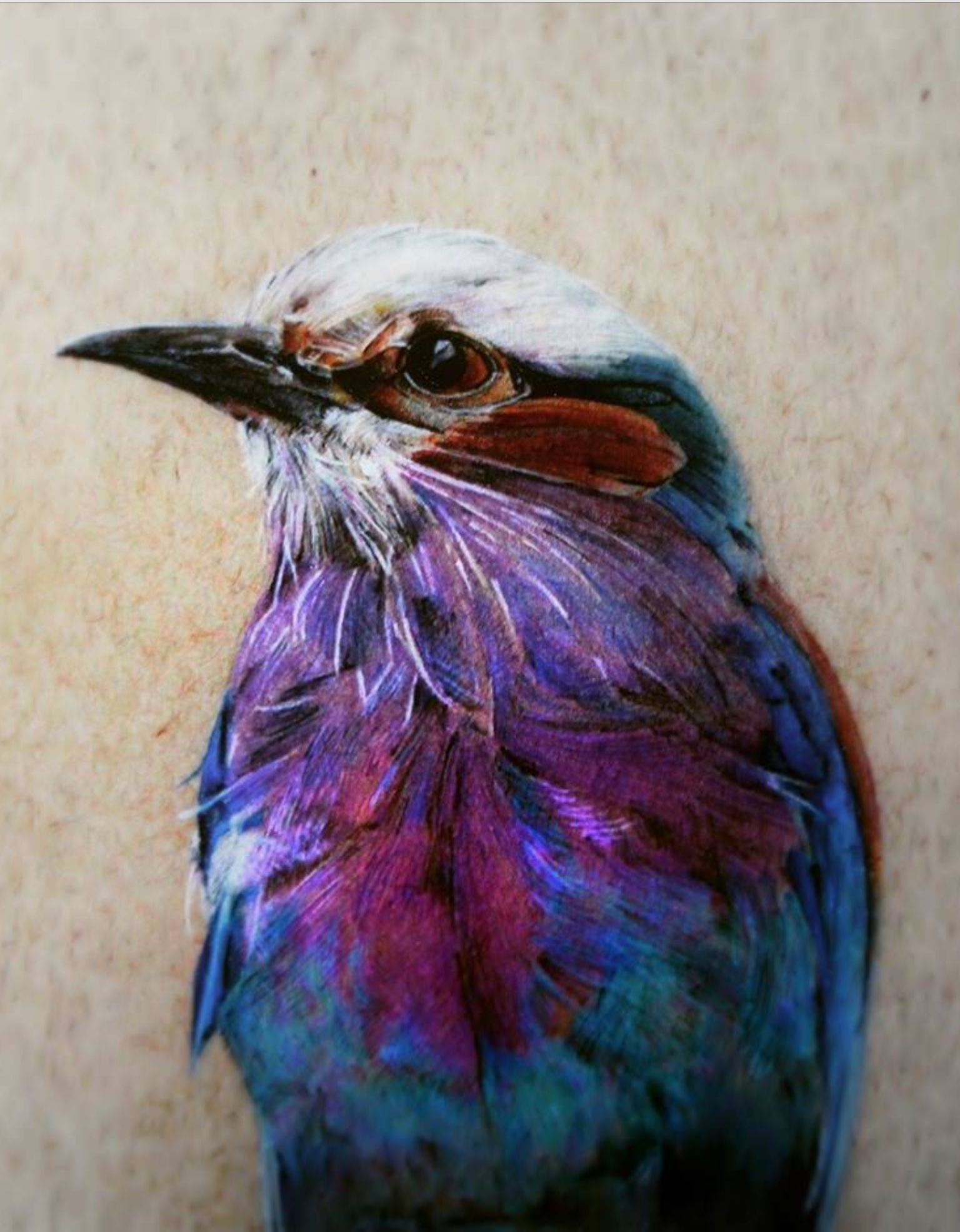 Lilac Breasted Roller Christopher Durant Caran d'Ache Luminance and Faber Castell Polychromos pencils, 2016