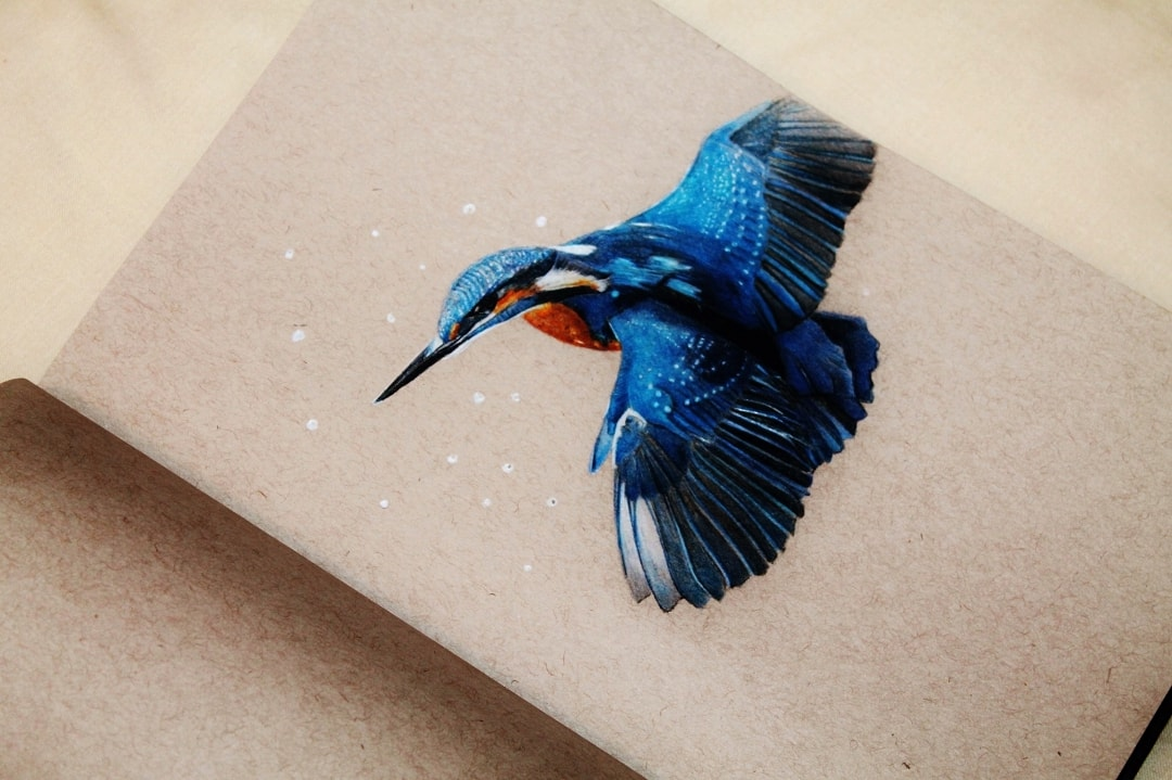 Common Kingfisher Christopher Durant Derwent Coloursoft 2014