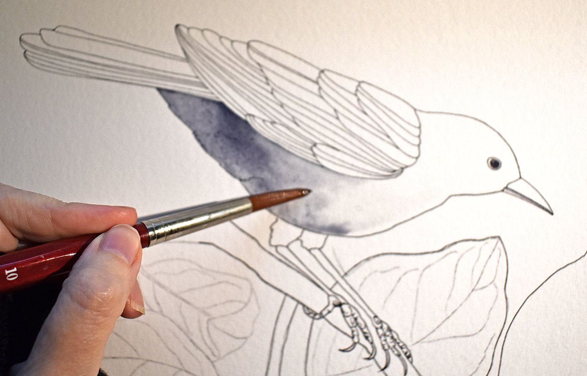 Brush test blackbird: da Vinci Cosmotop Spin