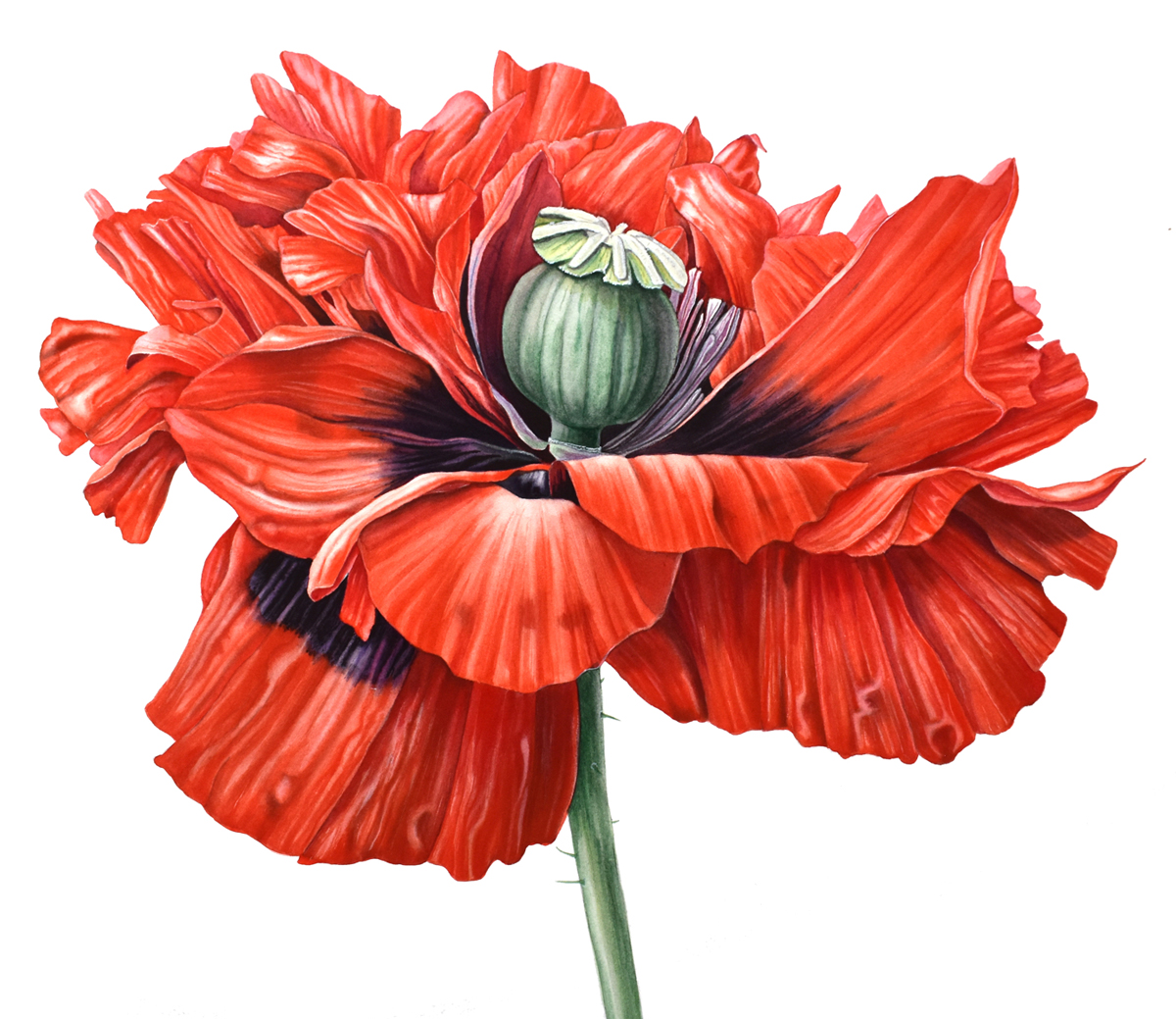 Poppy: Painted with Pro Arte Prolene + Series 007