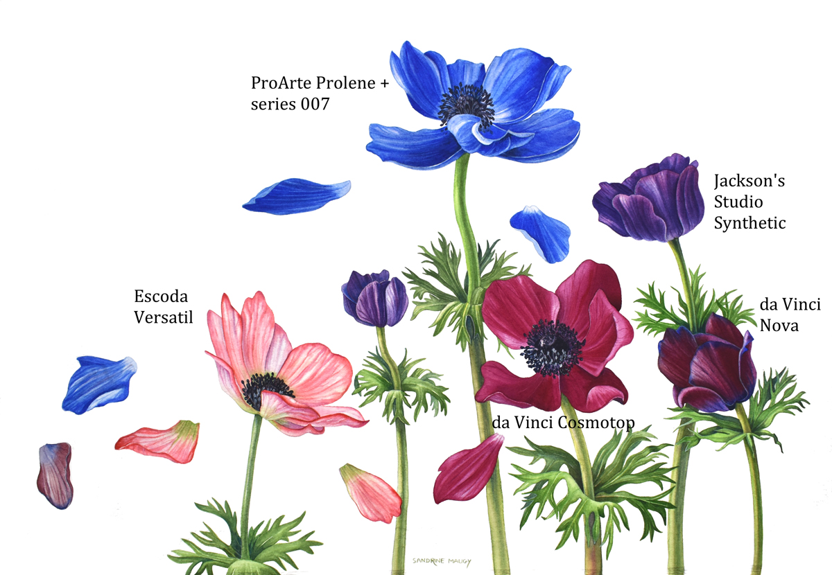 Brush test anemones: Each anemone was painted with a different brush.