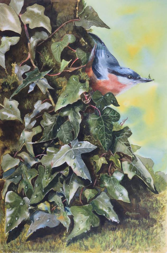 Christina Hopkinson, Nuthatch In The Ivy