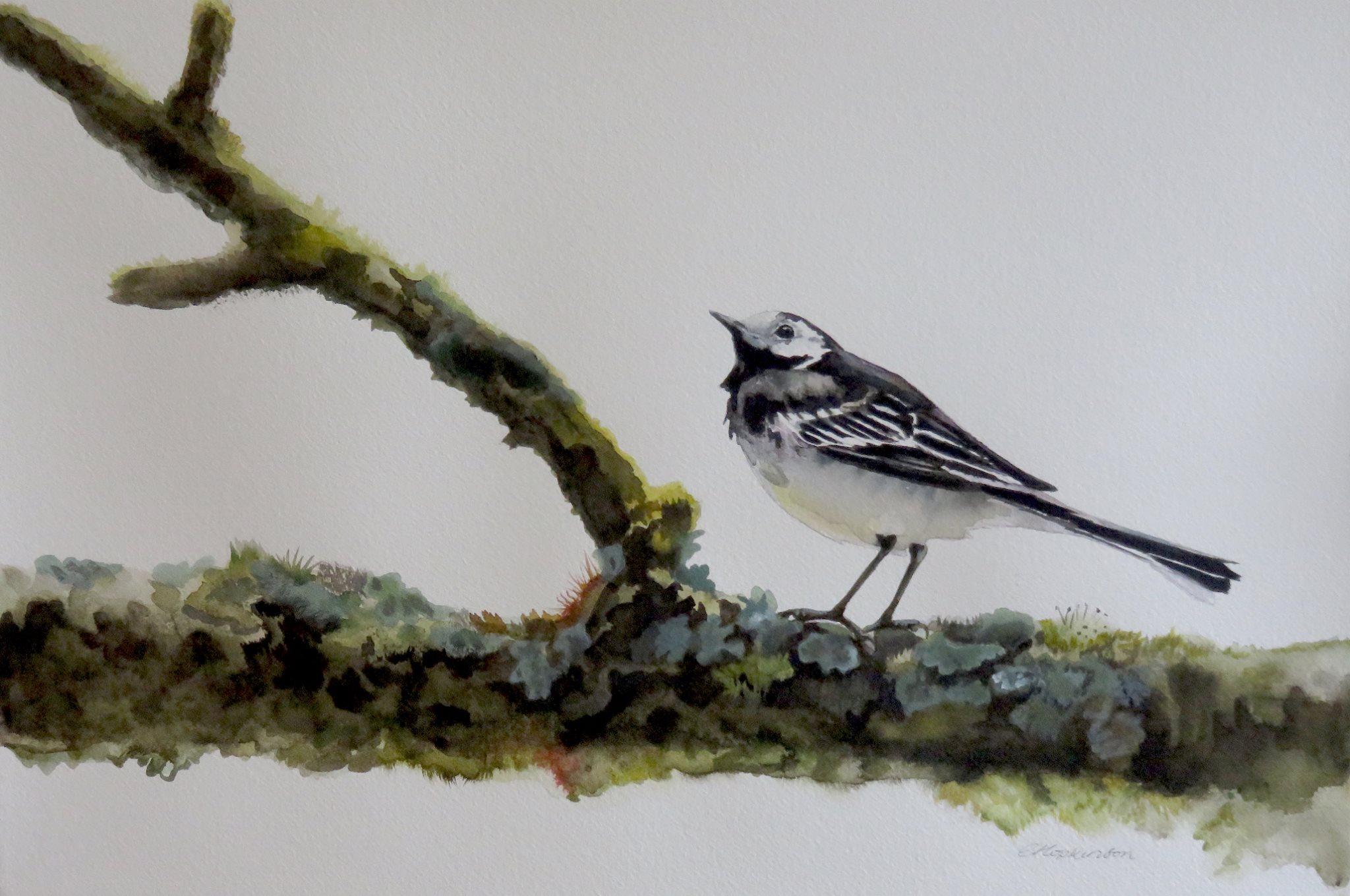 """Christina Hopkinson, Pied Wagtail at Lake Vyrnw, watercolour, 14""""x21"""""""